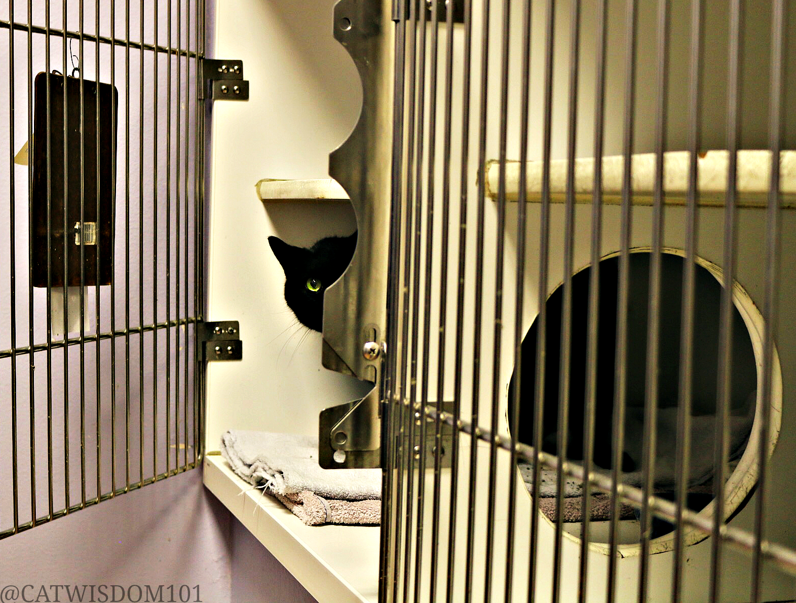 clyde_cat_shelter_cage