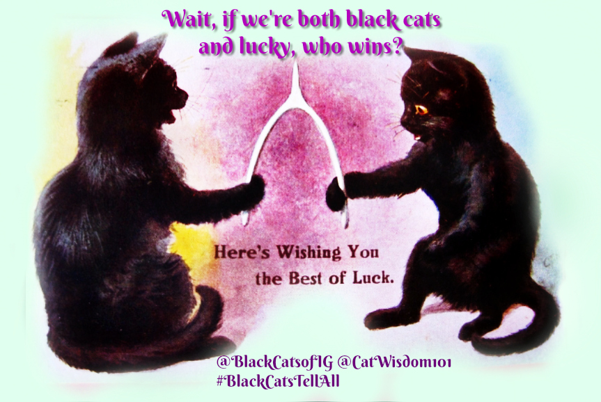 Black _cat_wishbone