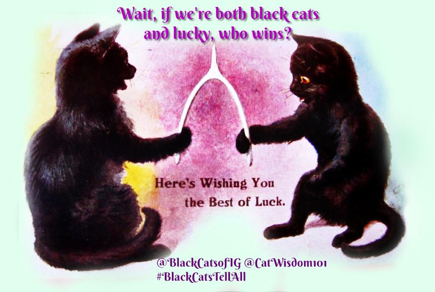 Black _cat_wishbone