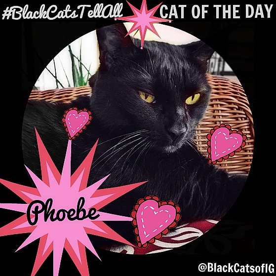 Cat of the day_phoebe