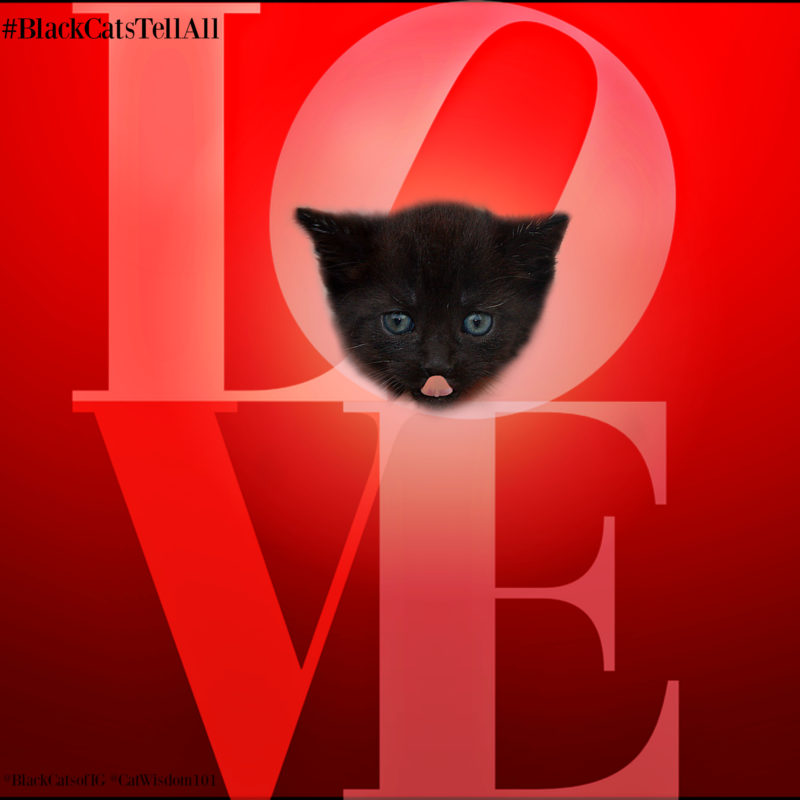 my love for cats Cats show their love in many ways and it usually involves body language and other behaviors find out if your cat is trying to tell you they love you.