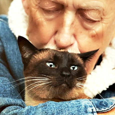 Dr. Pol_Siamese_cat