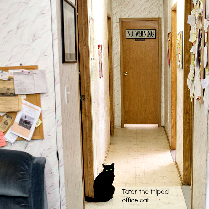 Dr.Pol _Tater_office_cat