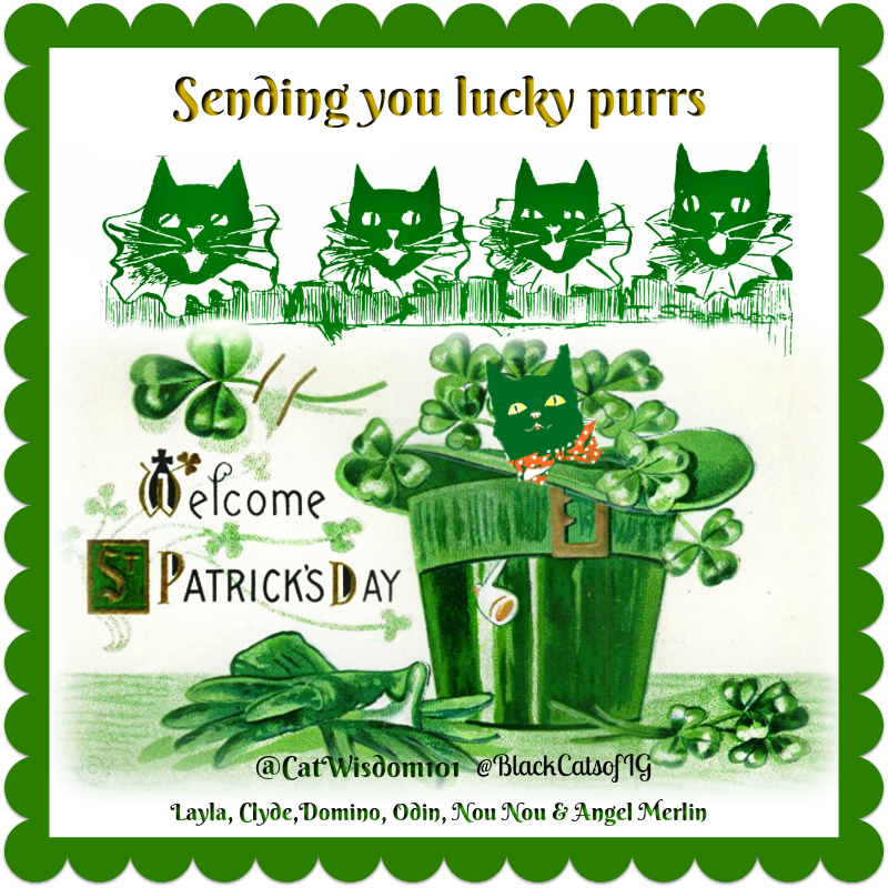 St. Patrick's Day_purrs