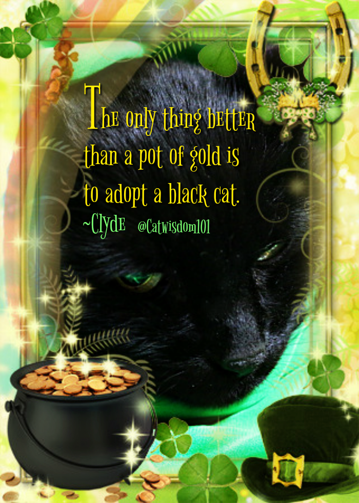 pot of Gold_cat