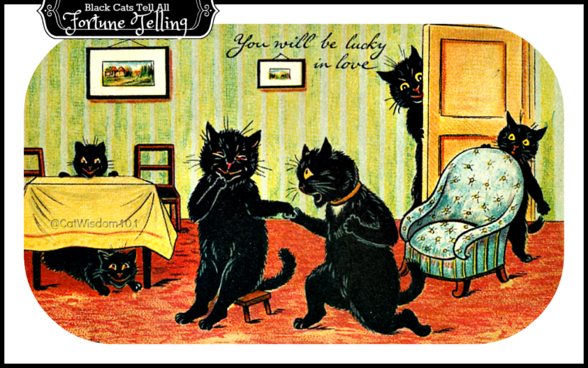 Black_cats_Fortune Telling _lucky in love