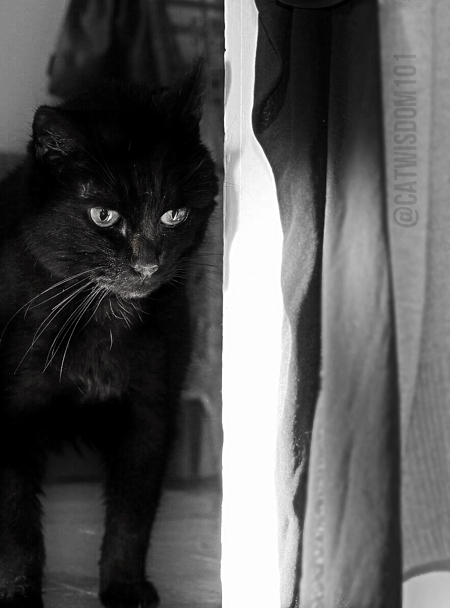 clyde_black_cat