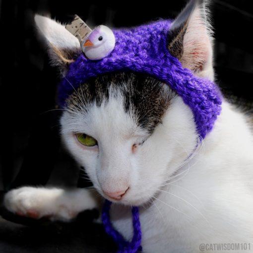 Odin_cat_Easter_bonnet