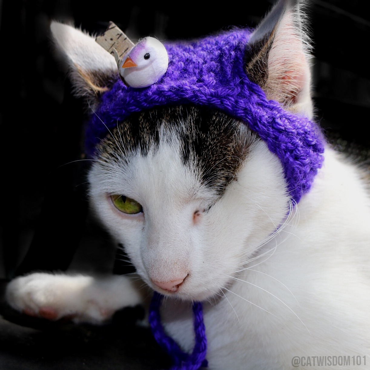 Odin_cat_Easter_bonnet