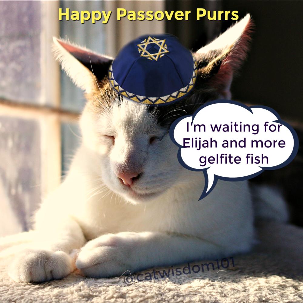 Passover_cat