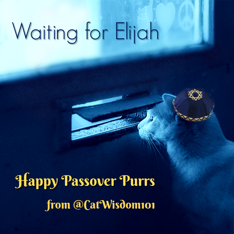 Passover_purrs