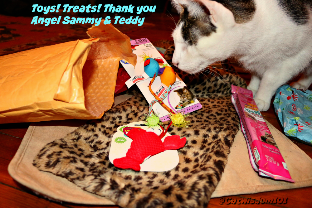 cat treats_toys
