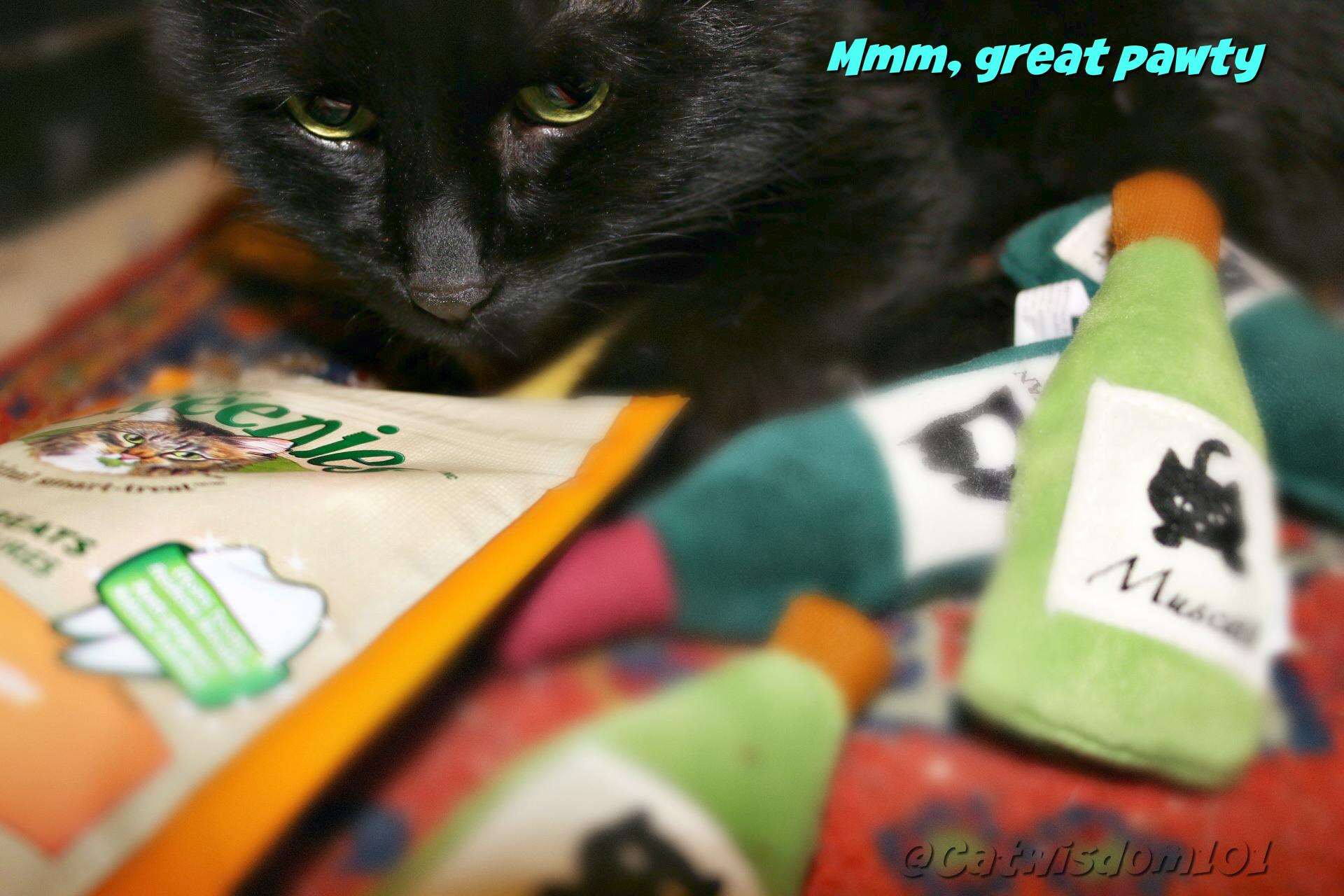 catnip_pawty