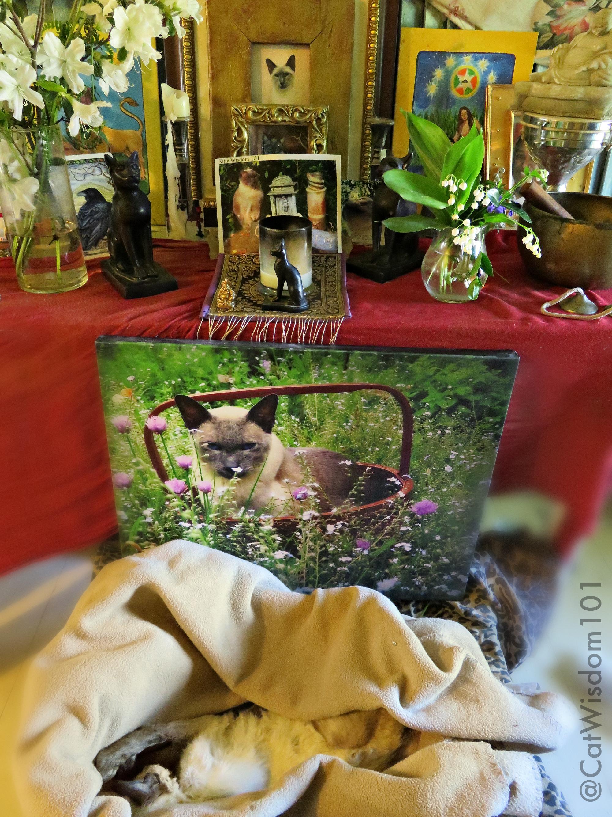 Merlin_cat_funeral