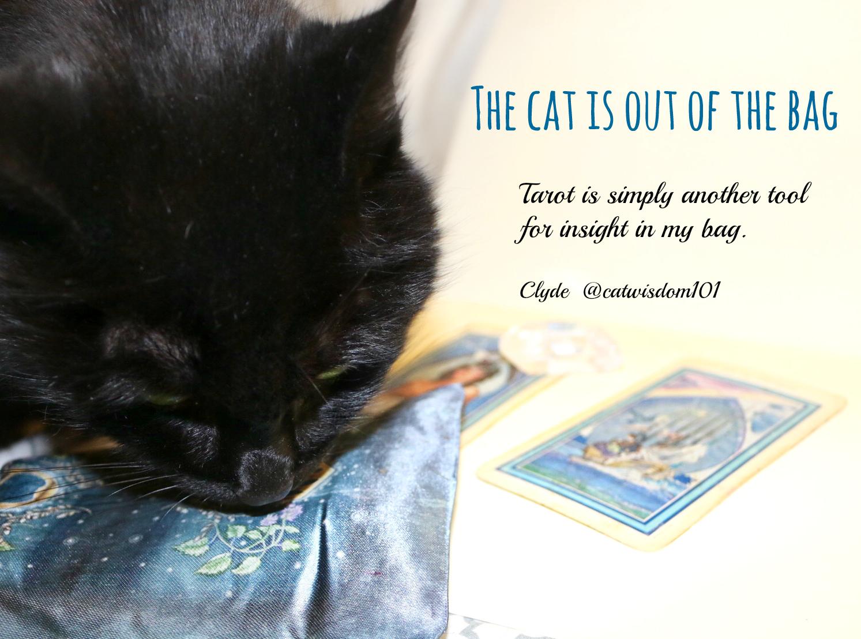 clyde_cat_bag_tarot