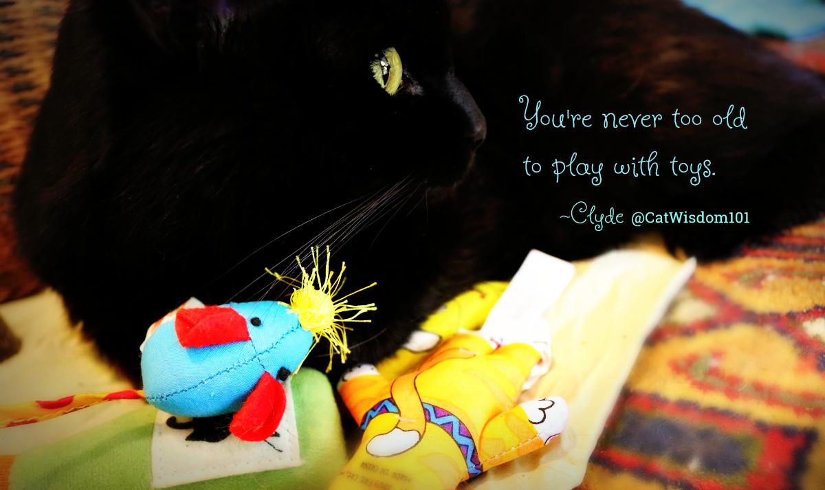 Cat_wisdom_quote_toys