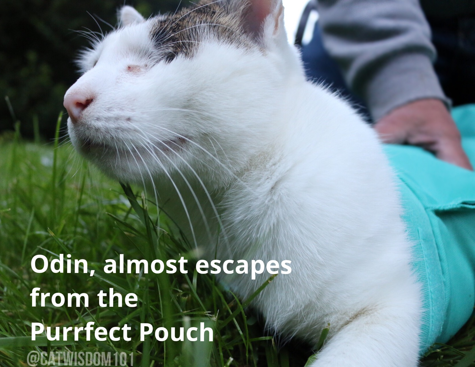 Purrfect pouch