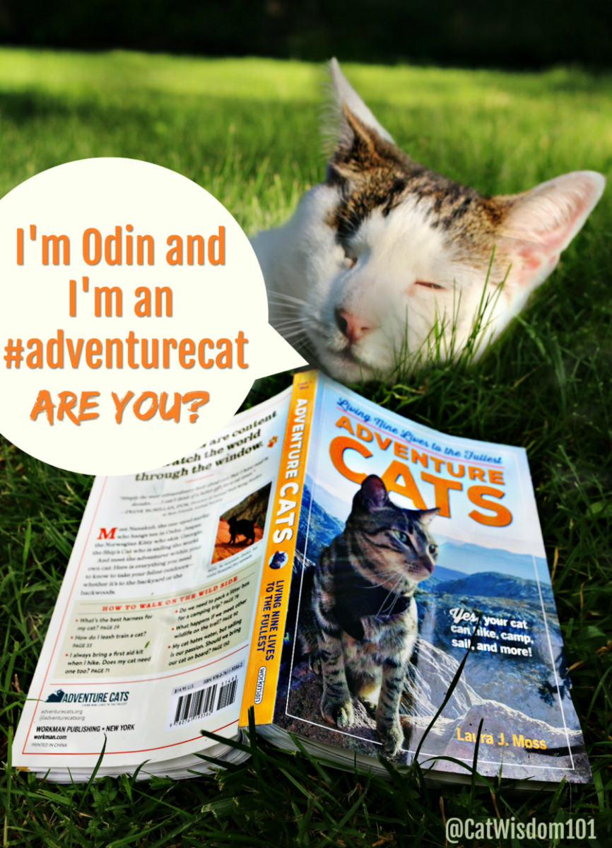adventure_cats_cat_wisdom_101