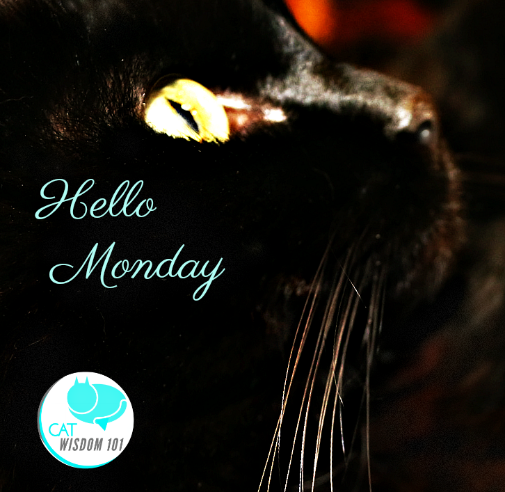 hello_monday_cat