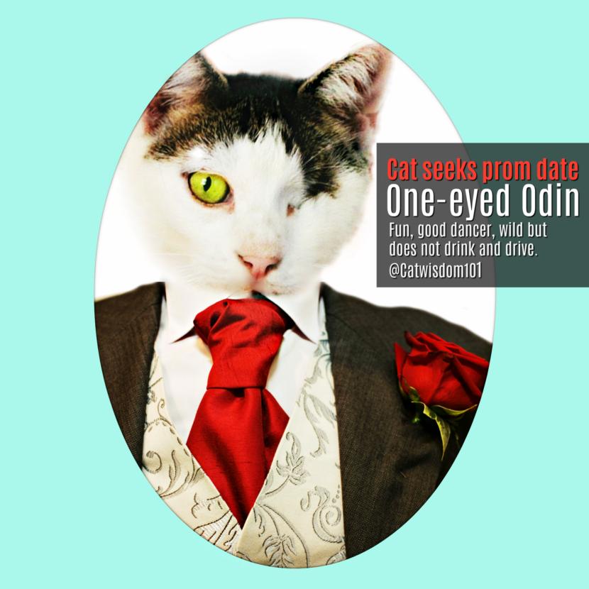 prom_odin_cat