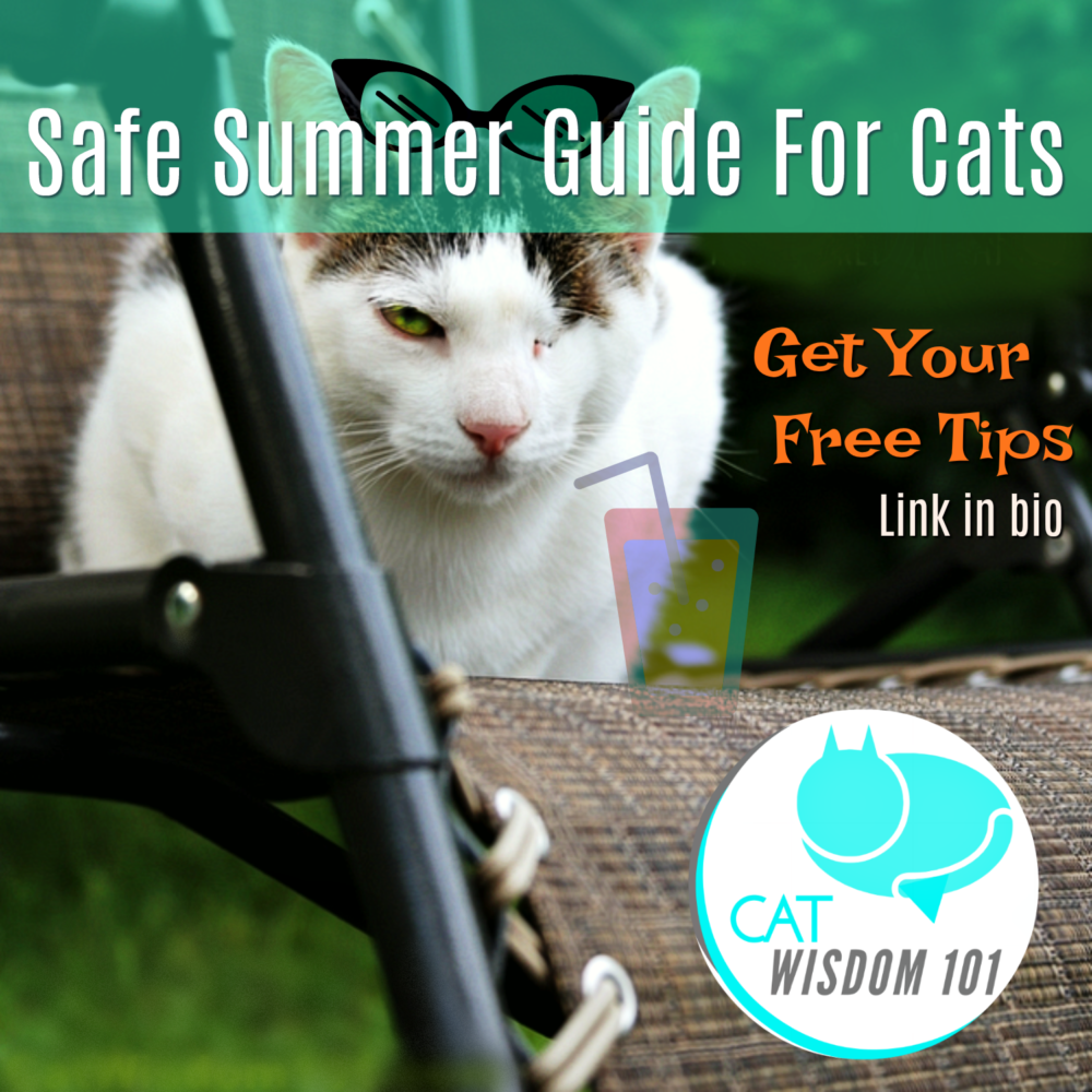 Keep Cats Safe As They Rule The World This Summer