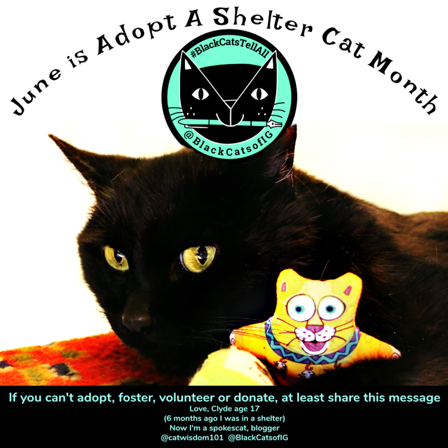 From Shelter Cat to Spokescat: Adopt A Shelter Cat Month