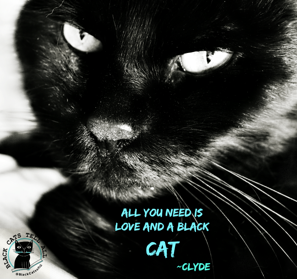 Clyde_black_cat_quote