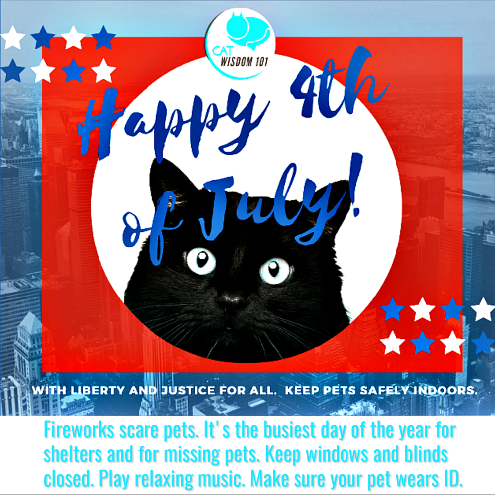 july 4th_pets_cats