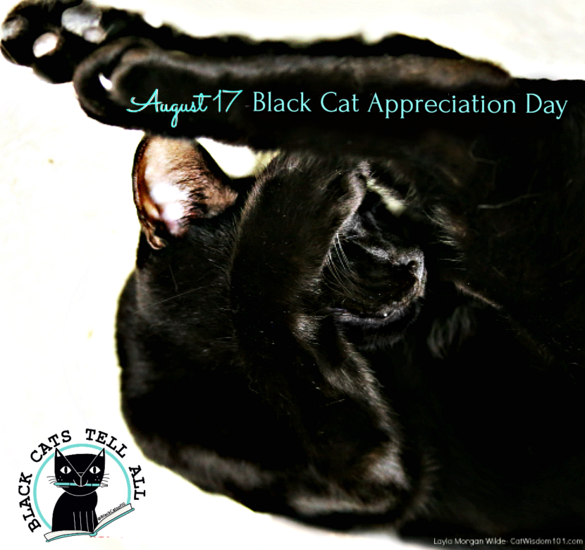 lack-cat_appreciation_day