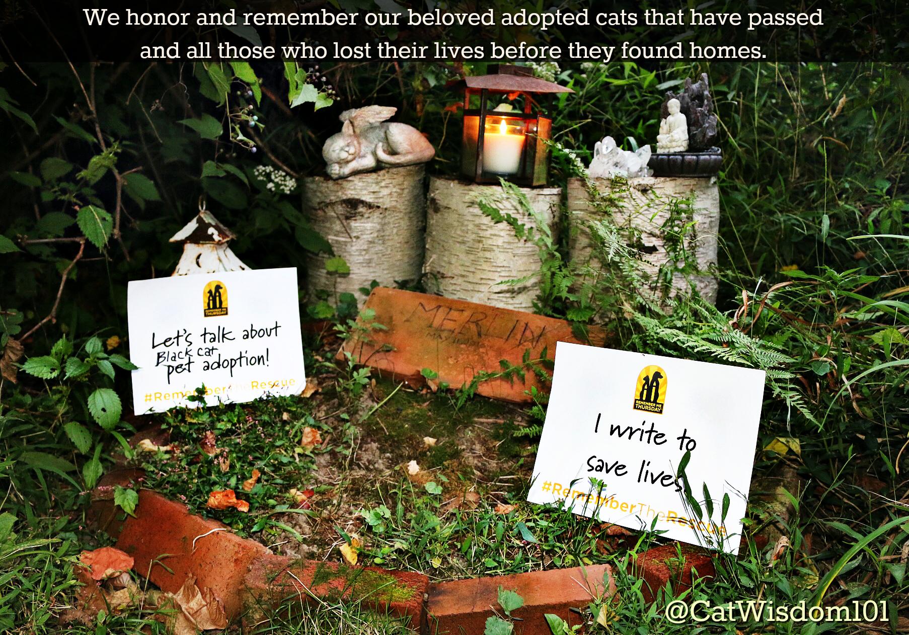 Cat_cemetery_catwisdom101_#remembermethursday
