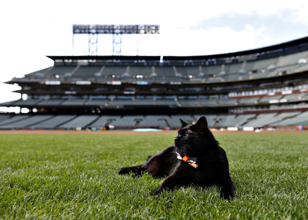 Snuckles_SF_giants Q & A With SF Giants Sam Dyson and His Lucky Black Cat Snuckles