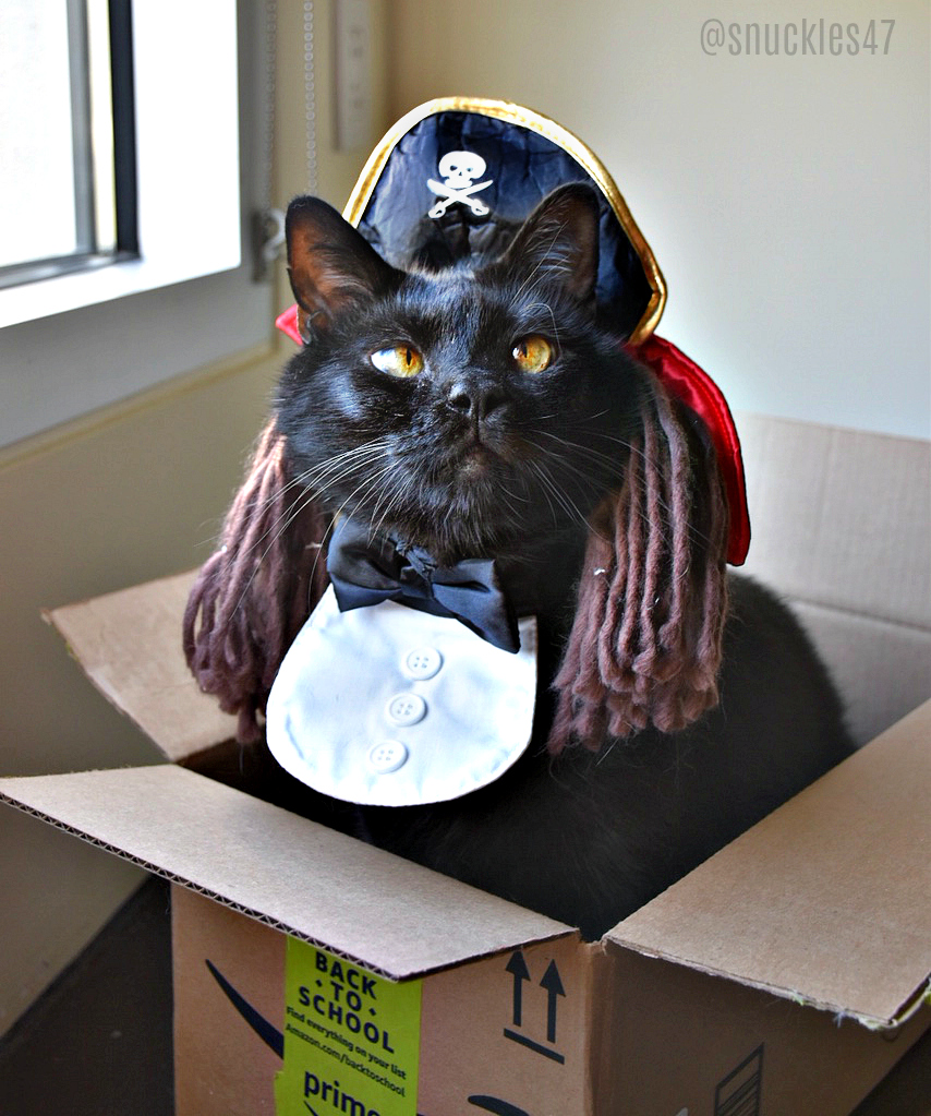 Snuckles_box_pirate_Halloween_cat Q & A With SF Giants Sam Dyson and His Lucky Black Cat Snuckles