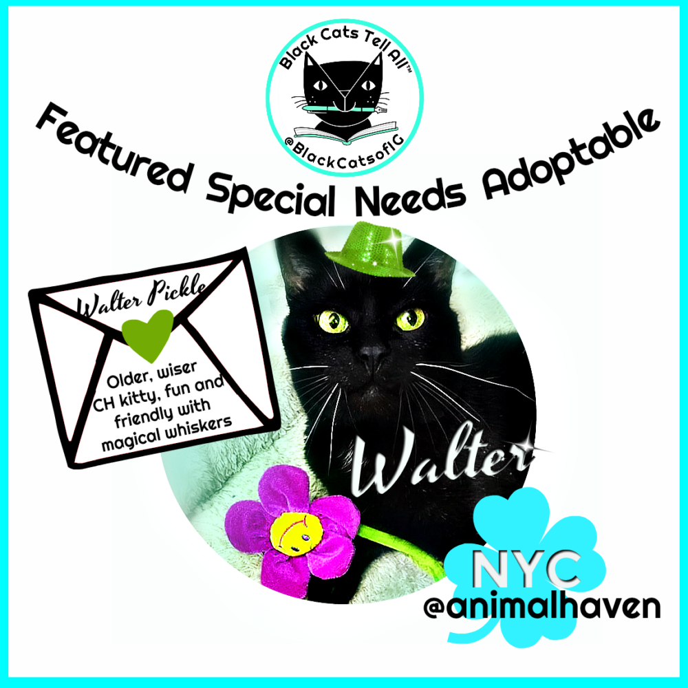 Walter_Animal_haven_NYC