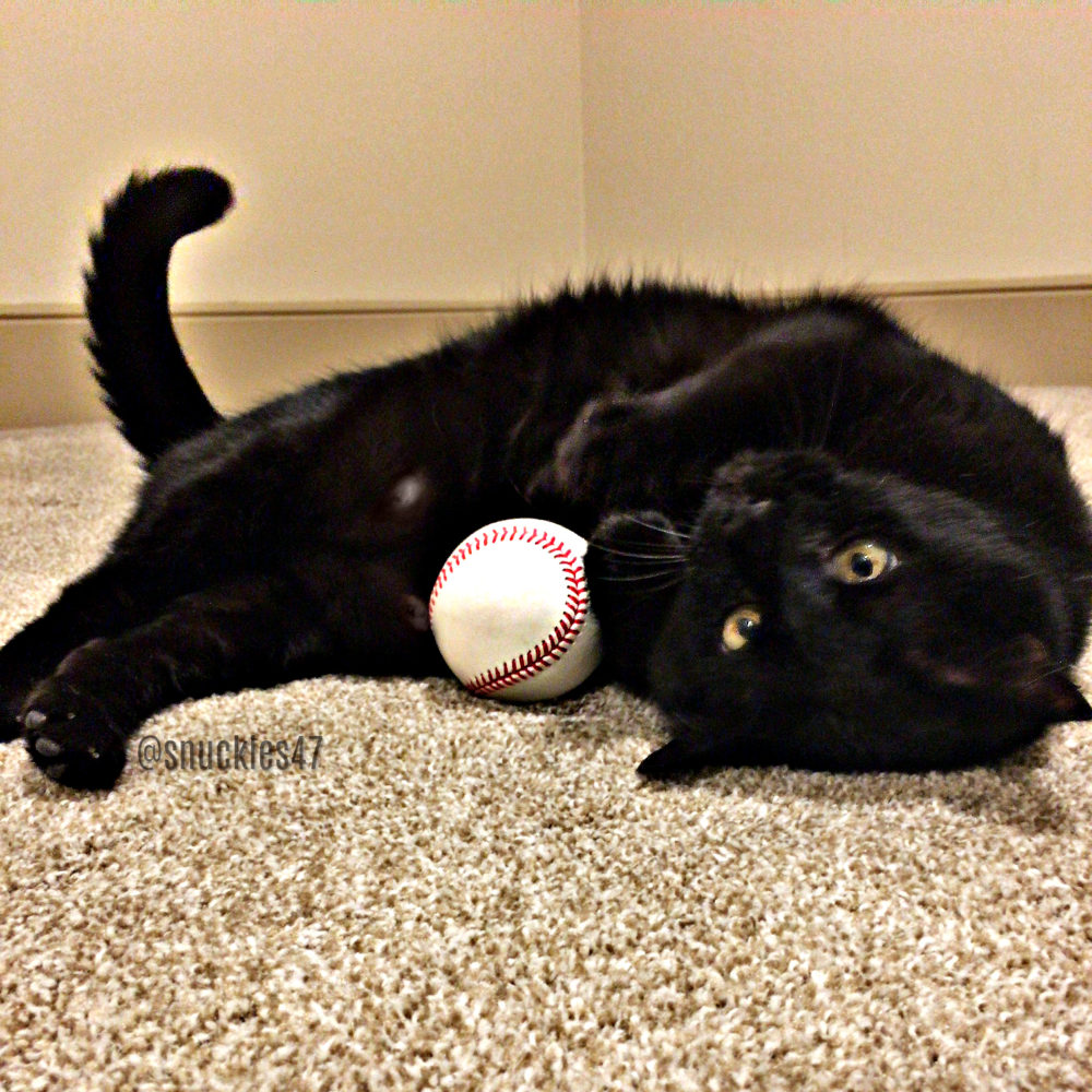 snuckles_basesball Q & A With SF Giants Sam Dyson and His Lucky Black Cat Snuckles