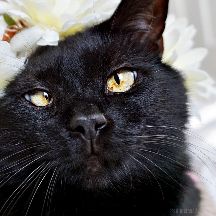 snuckles_cat_portrait Q & A With SF Giants Sam Dyson and His Lucky Black Cat Snuckles