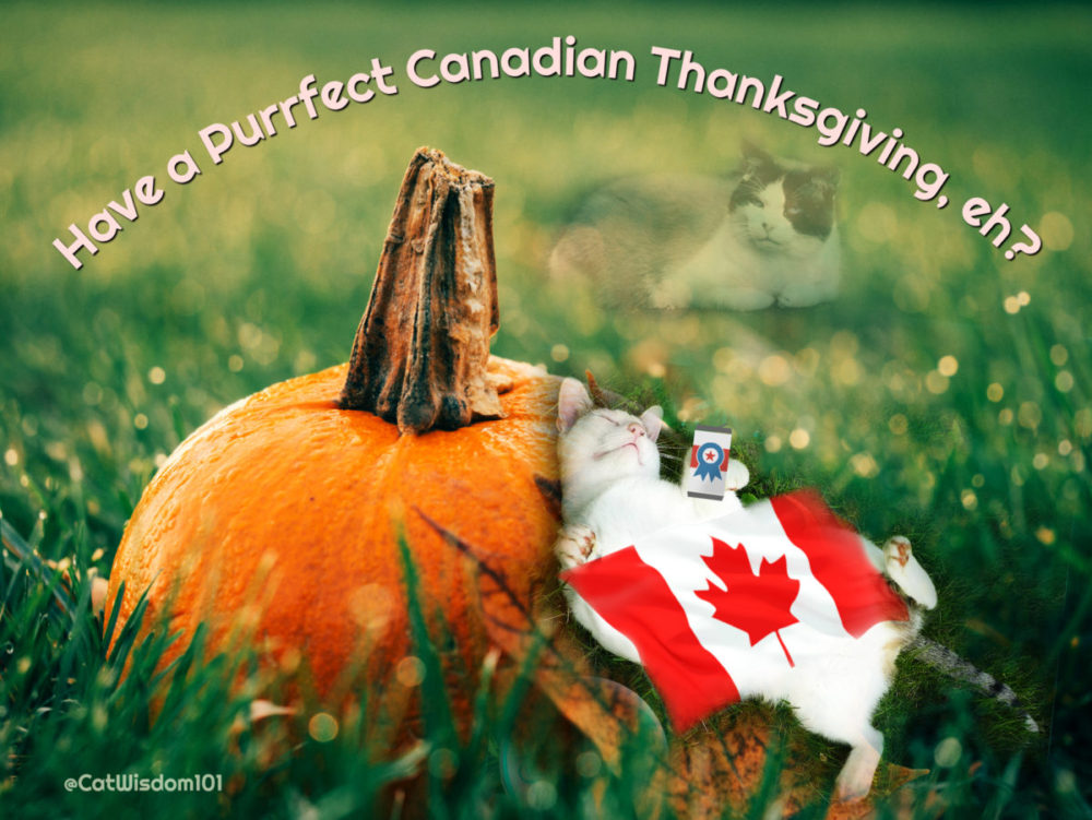 Canadian_thanksgiving_cats