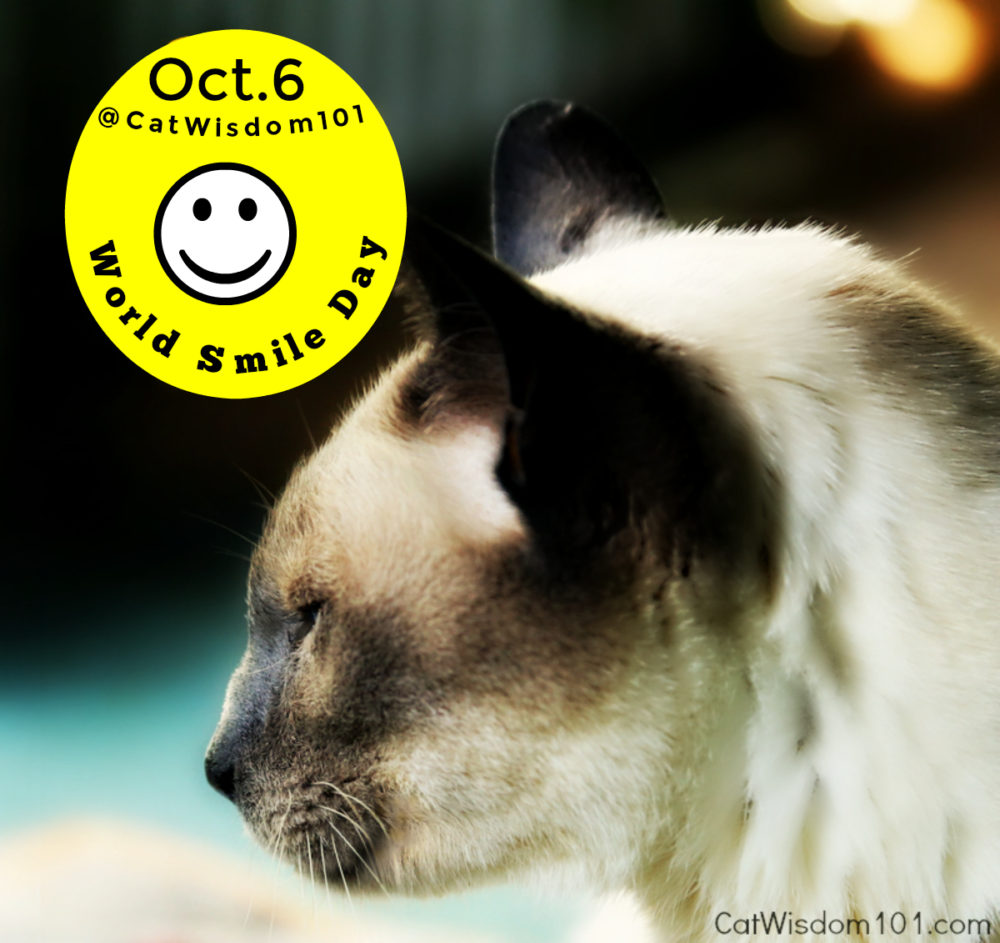 Merlin-cat-world_smile_day Odd Cats Bring Smiles On World Smile Day & Other Odd Holidays
