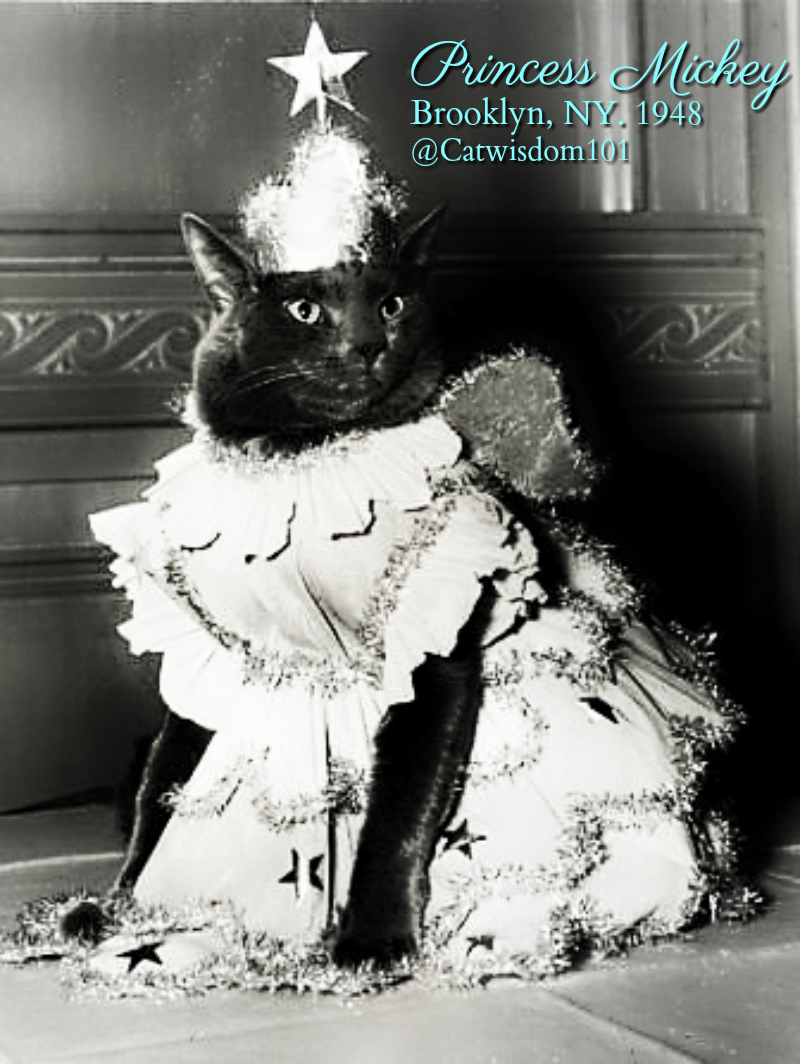 Princess_mickey_cat_show-_1948 Odd Cats Bring Smiles On World Smile Day & Other Odd Holidays