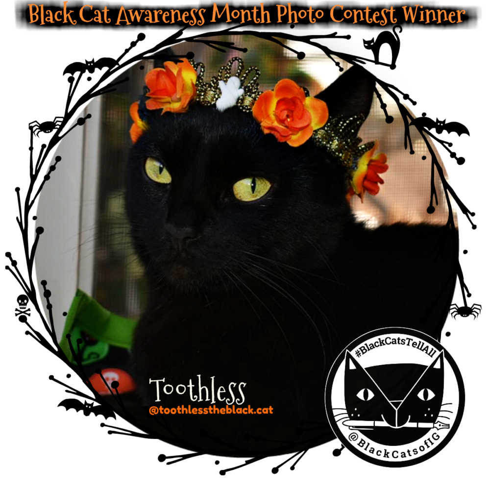 black_cat_awareness_day_contest winner