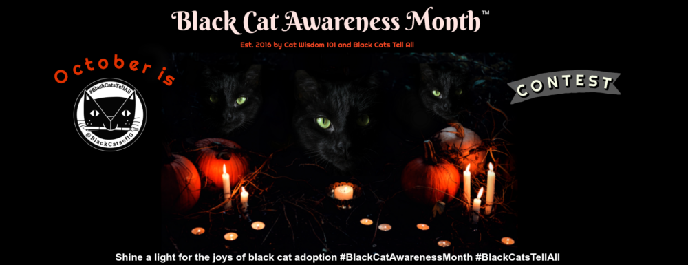 black_cat_awareness_month_contest