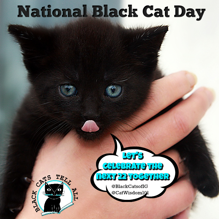 Spotlight On National Black Cat Day