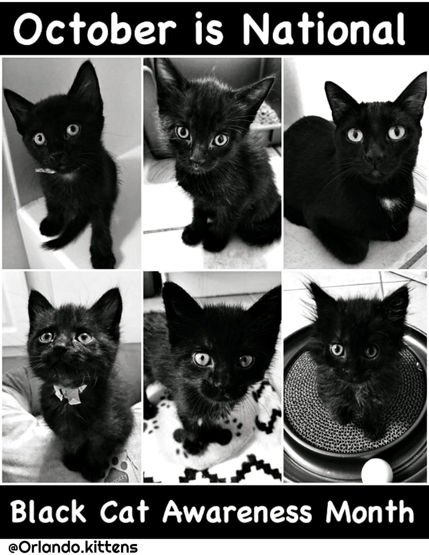 orlando.kittens_foster
