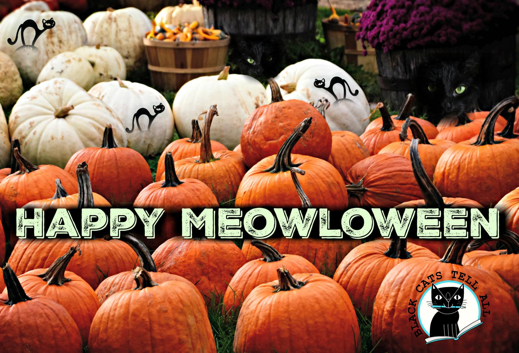 halloween_pumpkins_cats