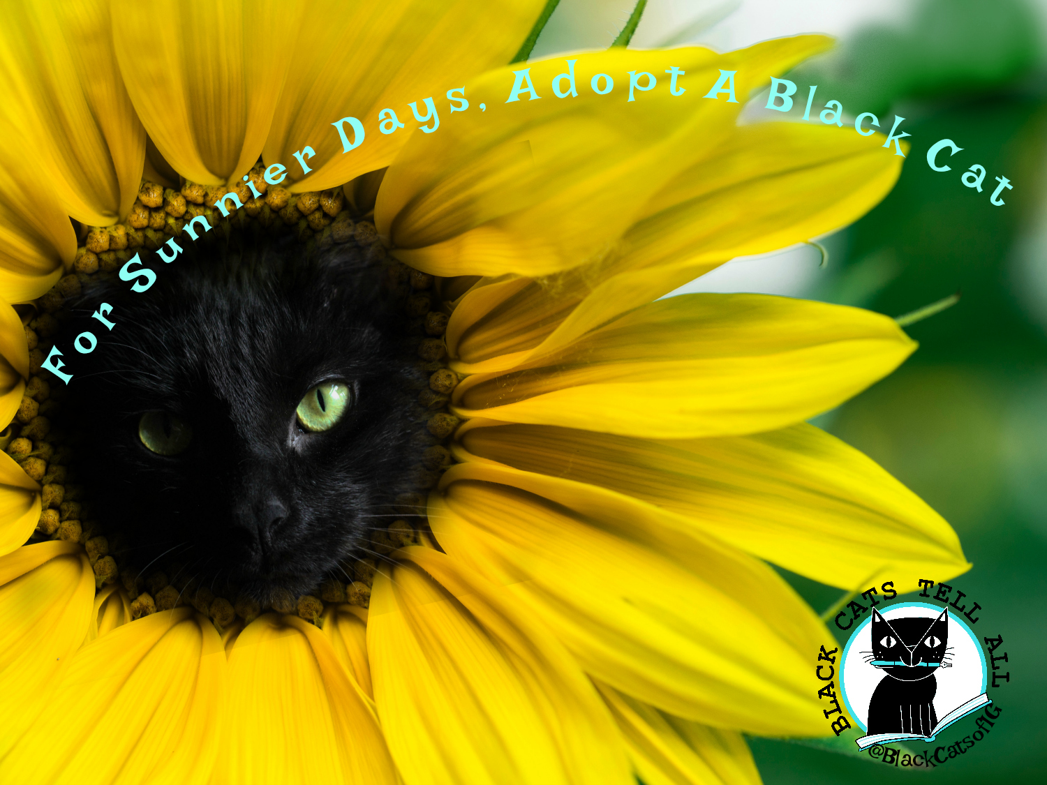 sunflower_black_cat_adoption