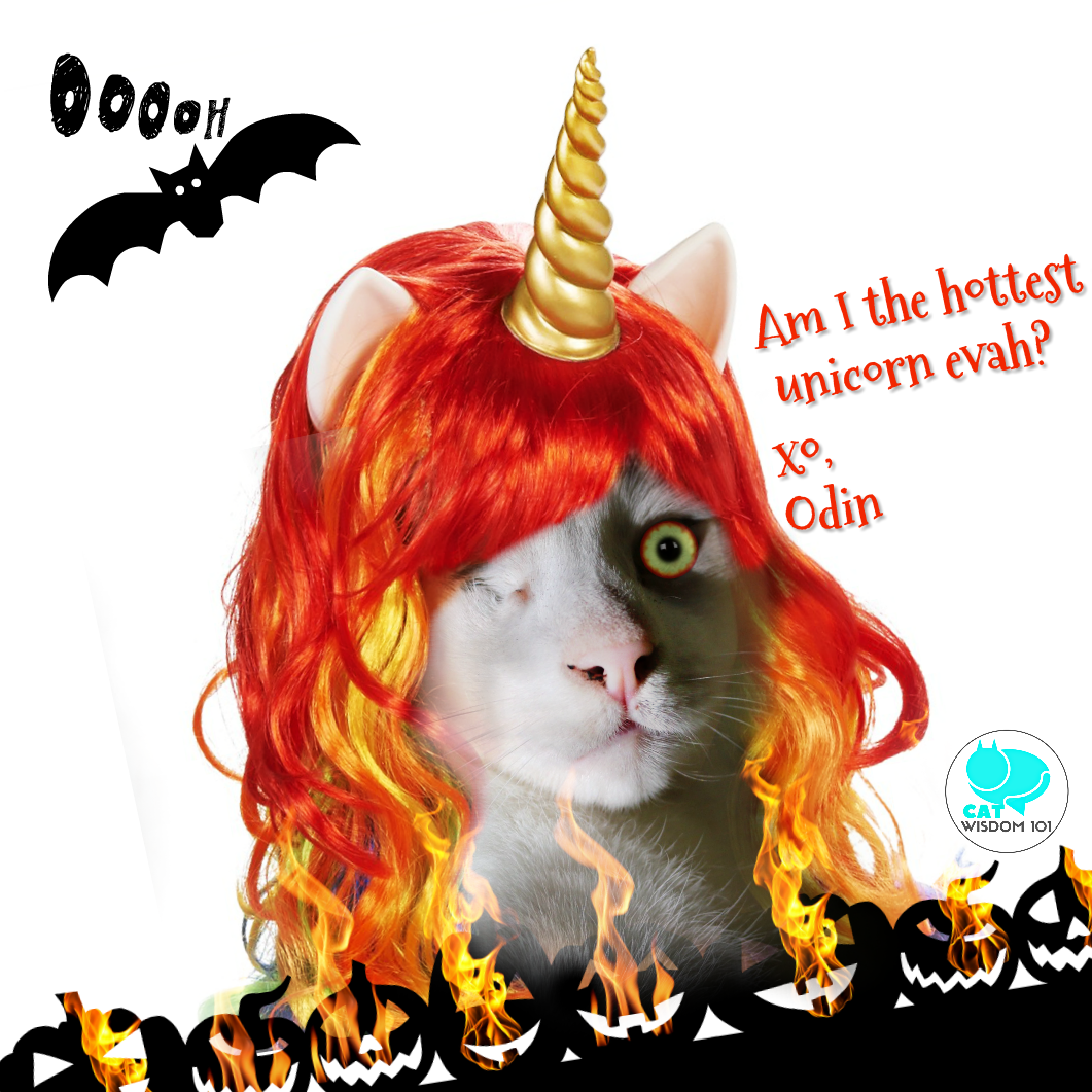 unicorn_cat_Odin