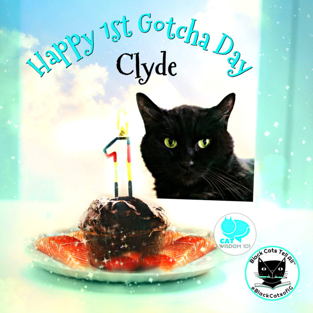 senior black cat blogger's first Gotcha Day