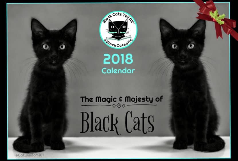 cyber meow monday sale