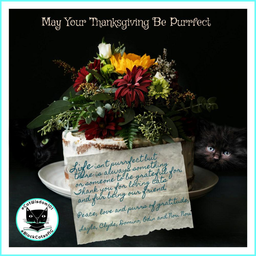 Purrs Of Gratitude From Cat Wisdom 101