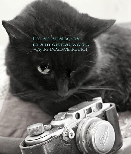 analog_cat_quote_vintage_leica_camera