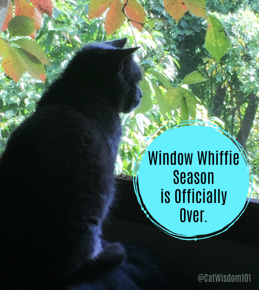 cat_window_watcher_whiffie